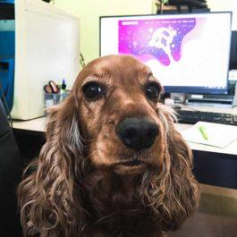 Офис Асистентът, който любезно посреща клиентите в офиса ни и допринася за уютната работна обстановка